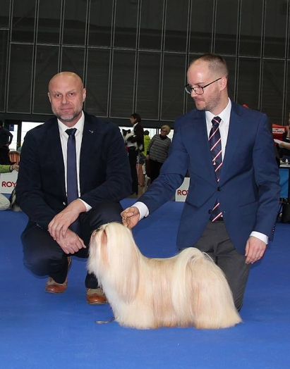 Bailee winning CACIB and BOS the first day under Mr. Vladimir Javorcik.