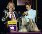 Winning another BOB at Westminster
